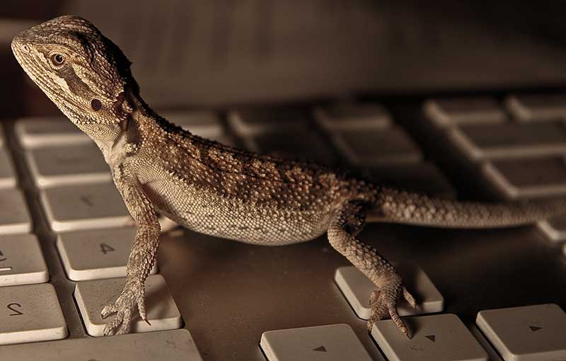 Bearded dragon accessories related keywords amp suggestions