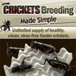 banner-crickets-breeding-made-simple-336×336