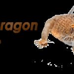 bearded-dragon-logo-600×200