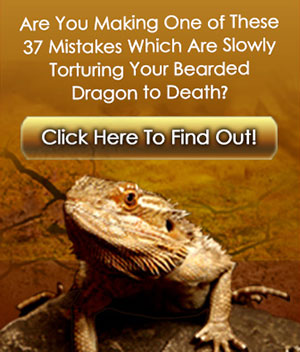 & Basic Bearded Dragon Cage Lighting Setting - Bearded Dragon Care azcodes.com