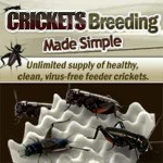 banner-crickets-breeding-made-simple-300×300
