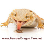 beardeddragon-banner-250×250